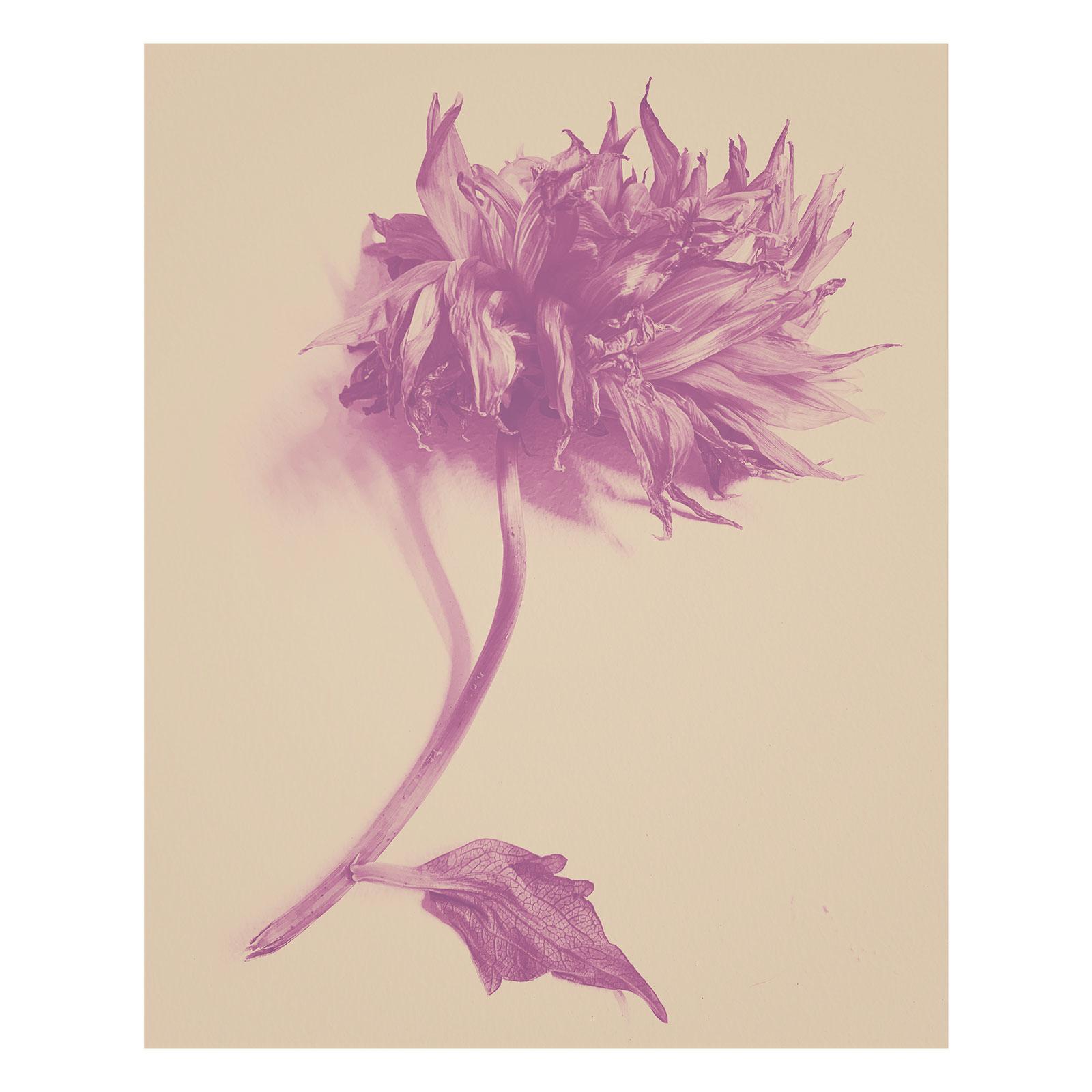 Flower Filterworks, August 2020